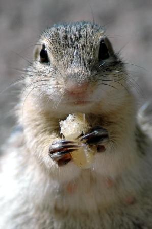 hungry-chipmunk-1.JPG