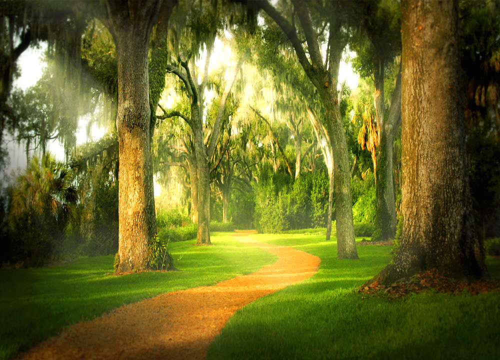 Not all of life's paths are this lovely!