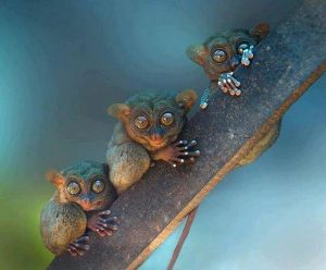 tarsiers little animals with buggy eyes